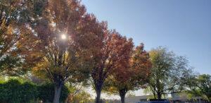 Sun shining through fall foliage on Gross Catholic's Campus